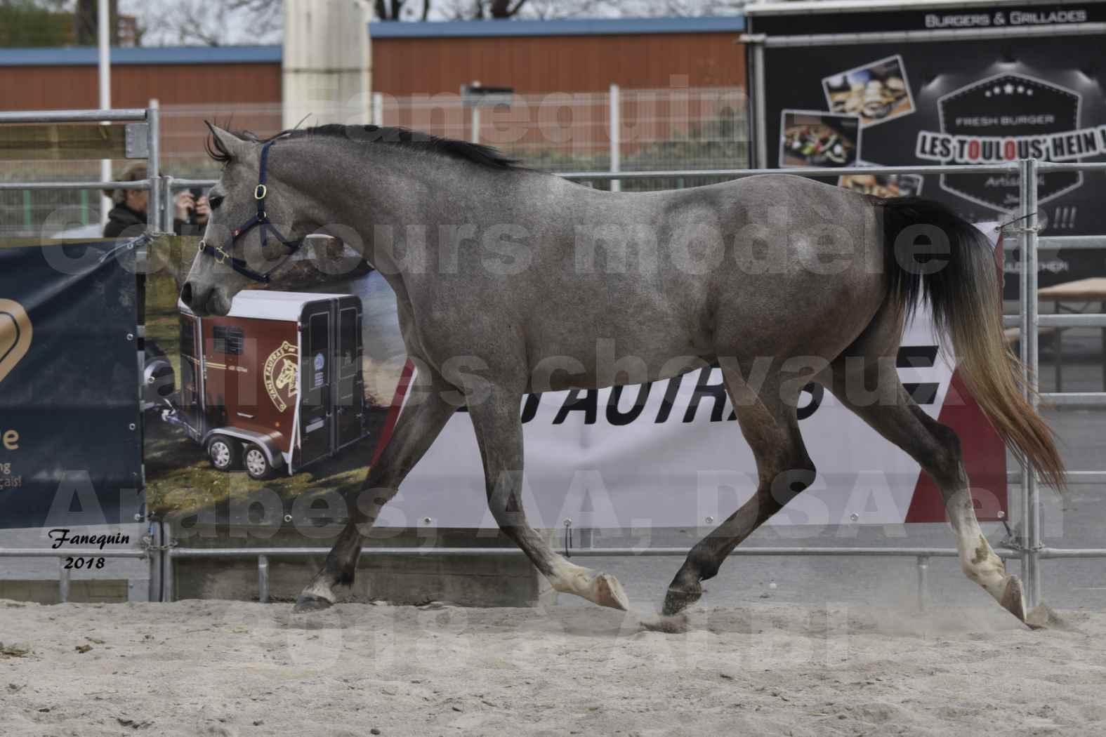 Concours d'élevage de Chevaux Arabes - D. S. A. - A. A. - ALBI les 6 & 7 Avril 2018 - FESIHAMKA ARTAGNAN - Notre Sélection - 3