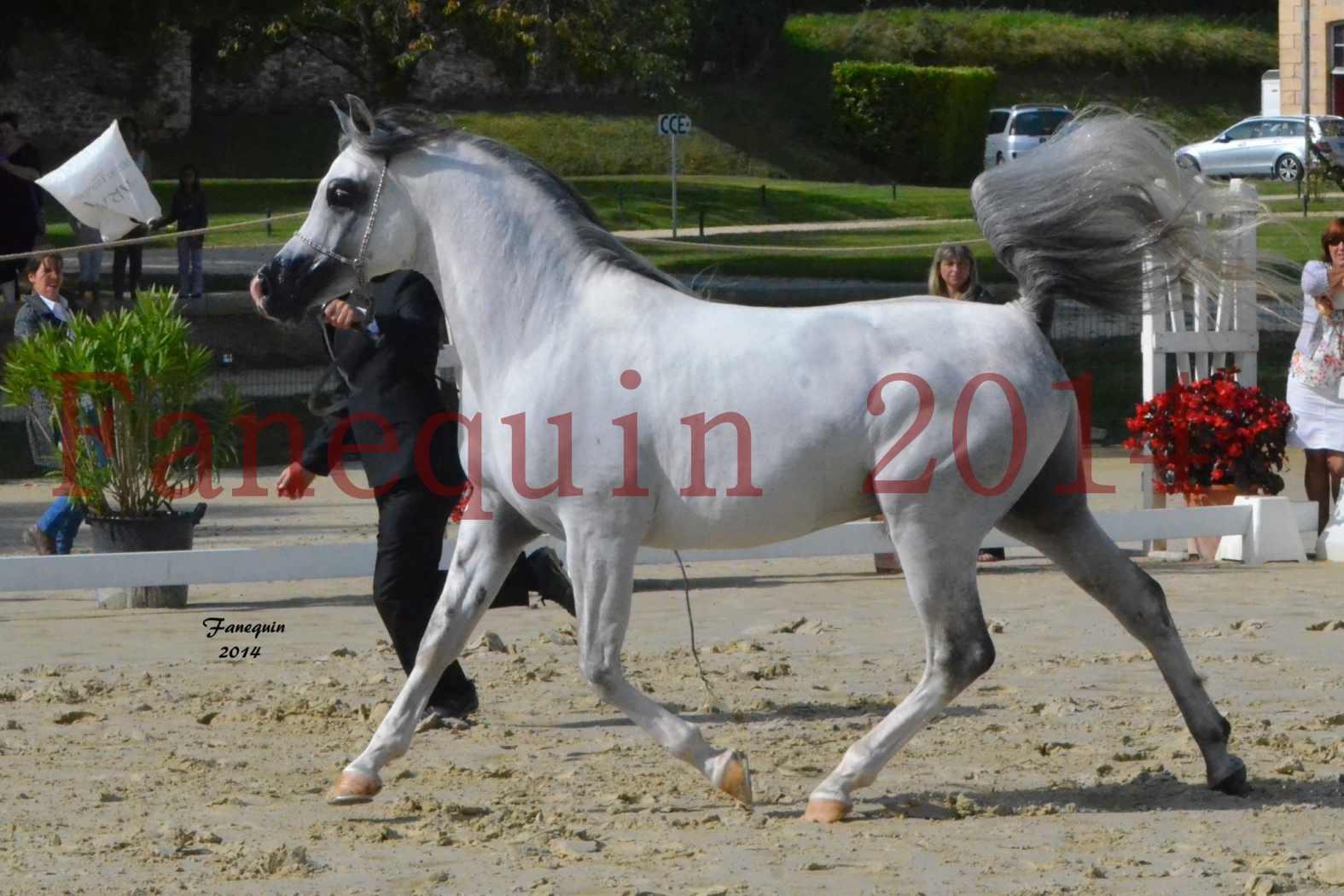 CHAMPIONNAT DE FRANCE  2014 A POMPADOUR - Notre Sélection - SHAOLIN DE NEDJAIA - 03