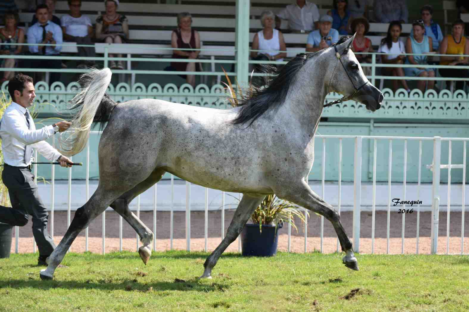 International Arabian Horse Show B de VICHY 2016 - ISABELLA - Notre Sélection - 07