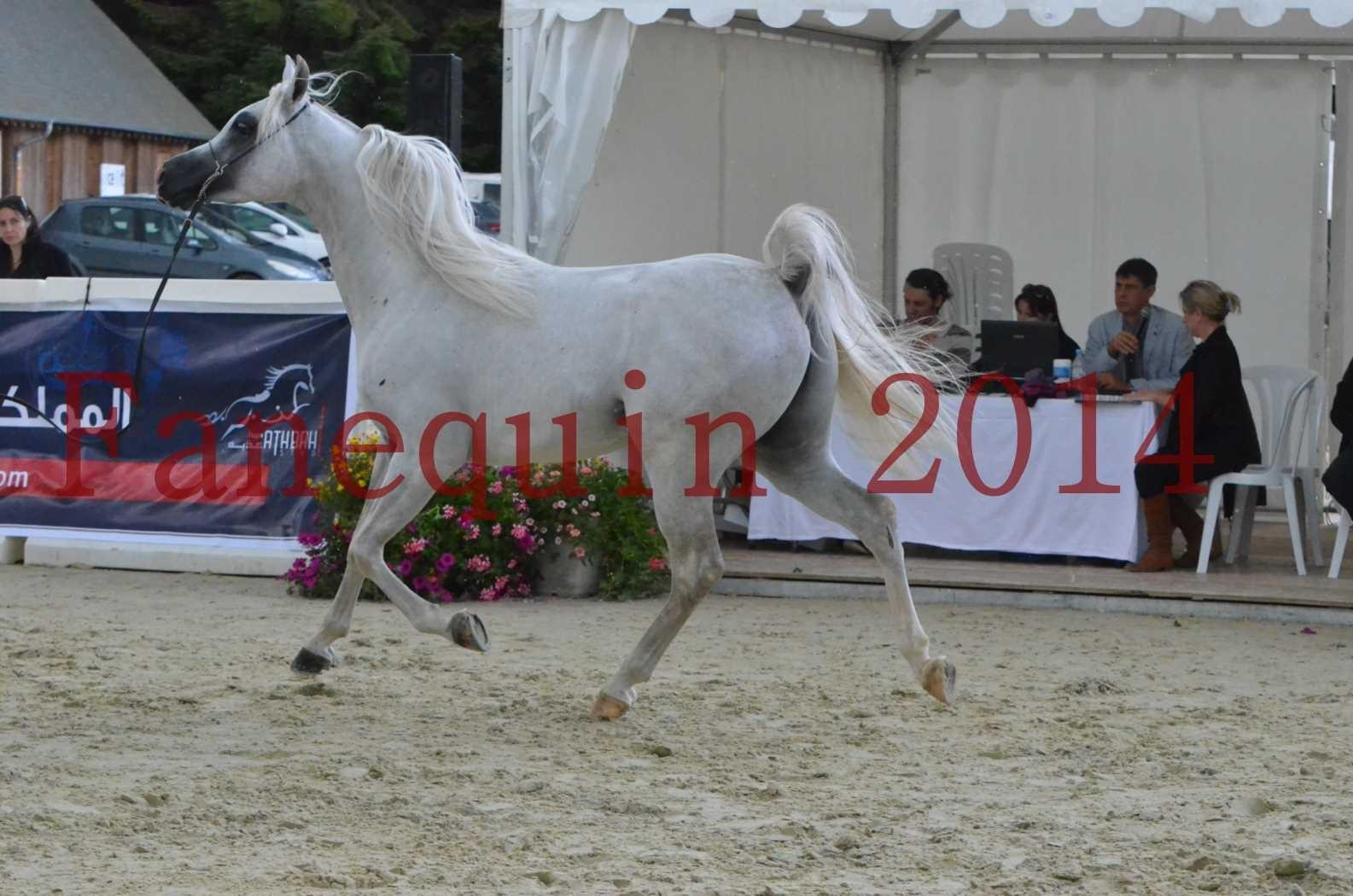 CHAMPIONNAT DE FRANCE 2014 A POMPADOUR - Sélection - FA STARLIGHT - 10