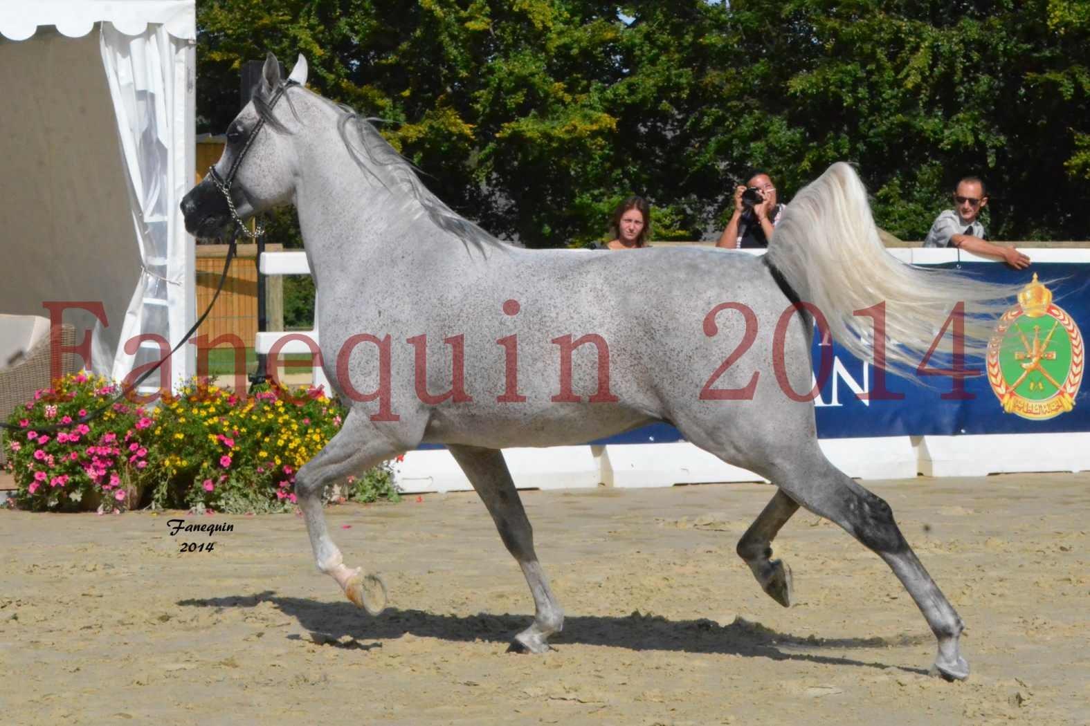 CHAMPIONNAT DE FRANCE  2014 A POMPADOUR - Notre Sélection - SHEYK DE GARGASSAN - 02