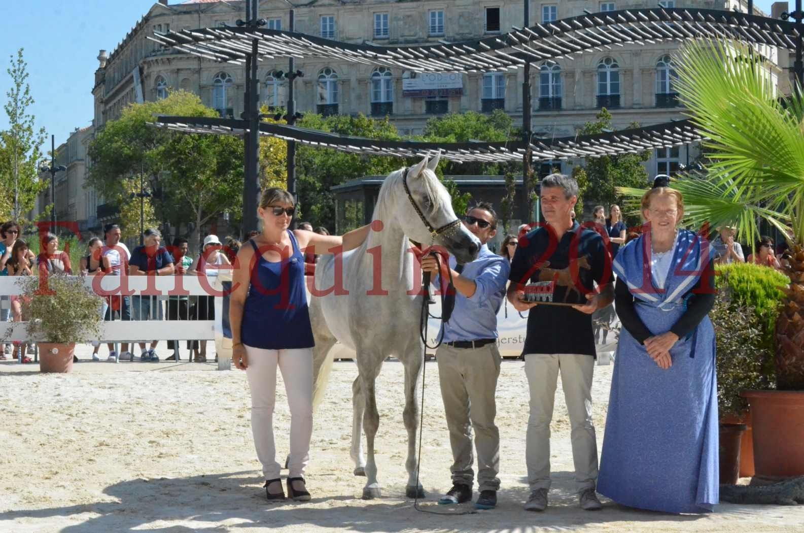 Concours national de Nîmes 2014 - Championnat Femelles Juniors - VOLODIA DE LAFON - 20