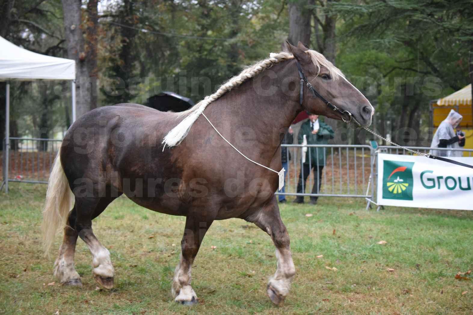 Concours Régional de chevaux de traits en 2017 - Trait BRETON - ELENNE DE TOU FOLL - 13