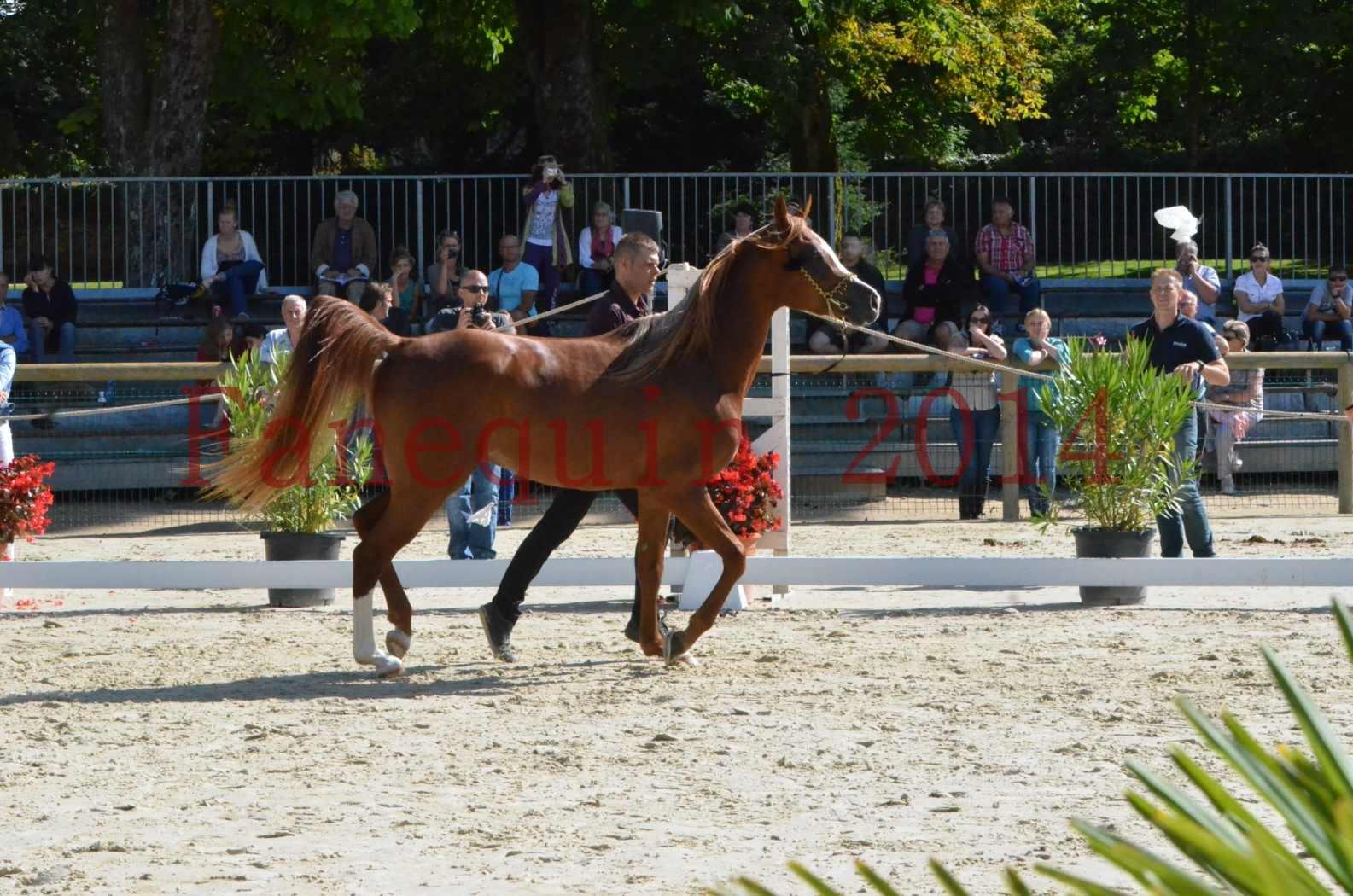 Championnat de FRANCE 2014 - Amateurs - SELECTO IBN SAMAWI - 003