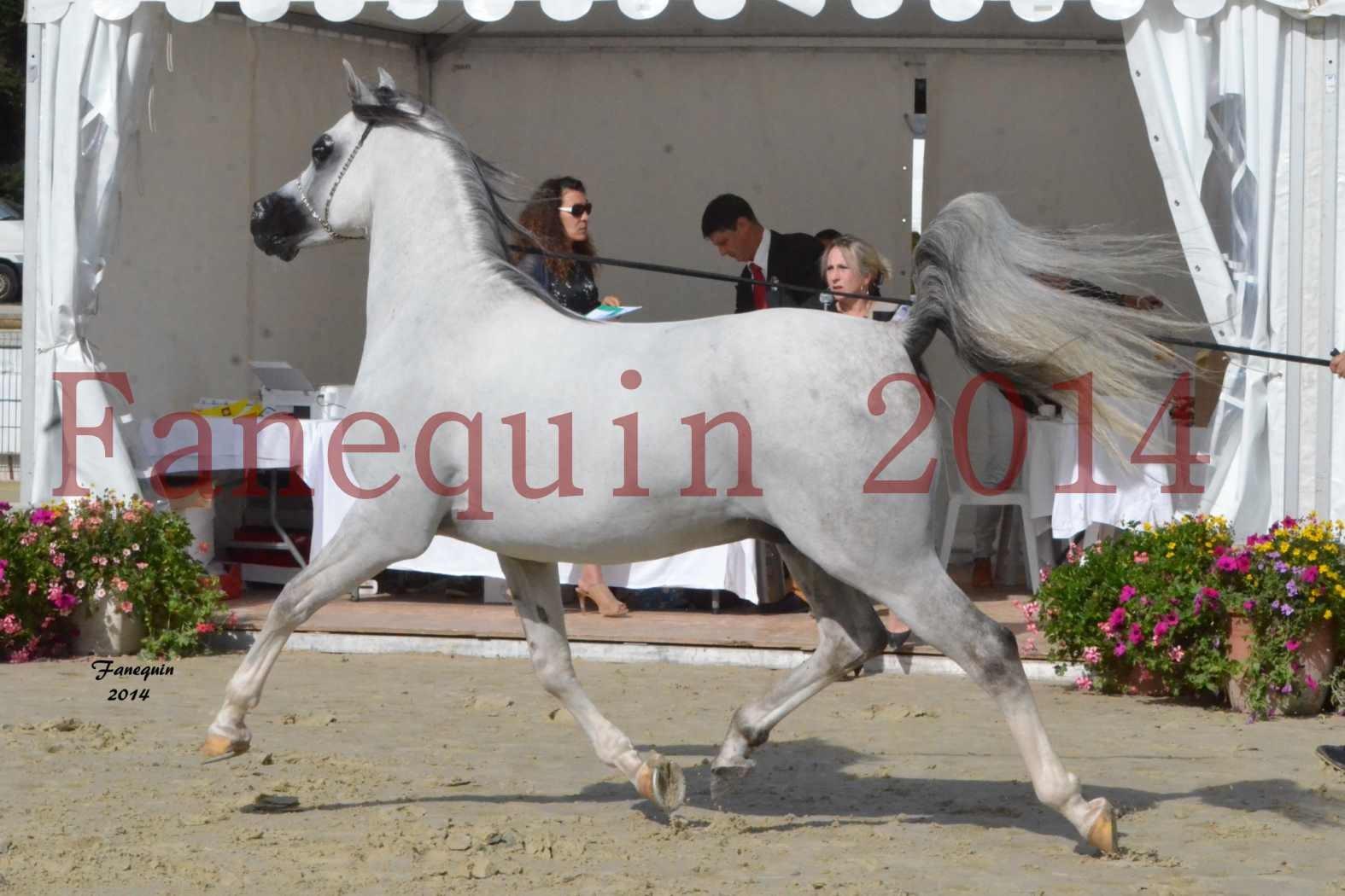 CHAMPIONNAT DE FRANCE  2014 A POMPADOUR - Notre Sélection - SHAOLIN DE NEDJAIA - 10