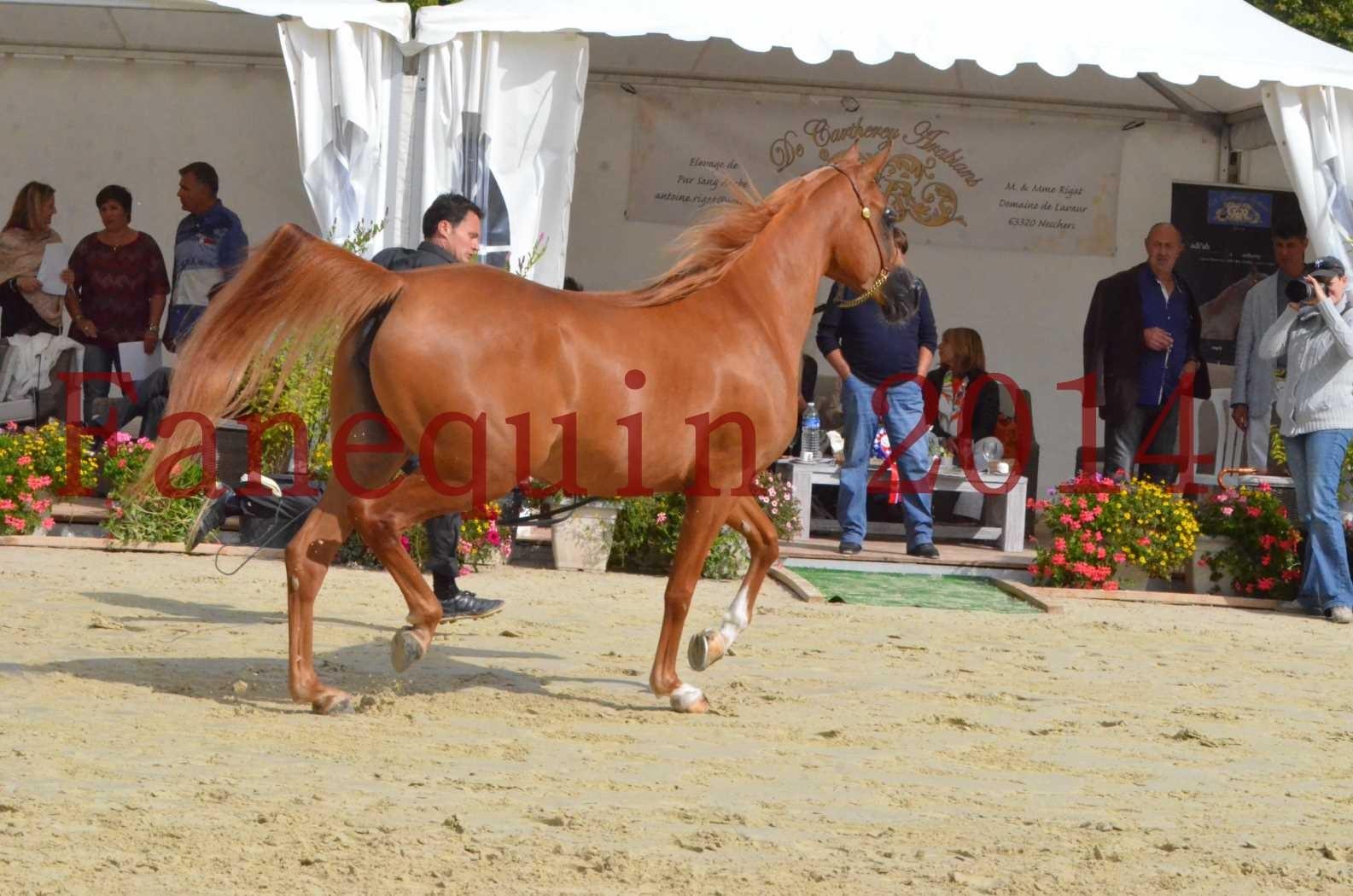 CHAMPIONNAT DE FRANCE 2014 A POMPADOUR - Sélection - LUTFINAH JA - 37