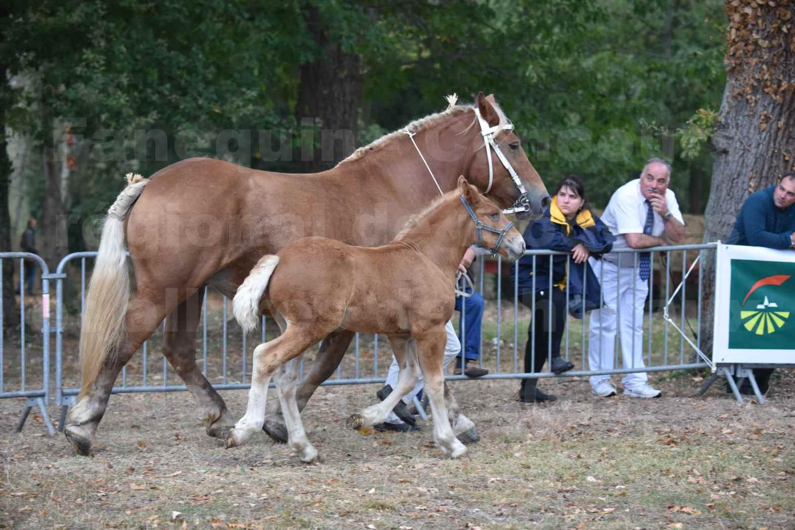 Concours Régional de chevaux de traits en 2017 - Jument & Poulain Trait COMTOIS - CANNELLE 9 - 02