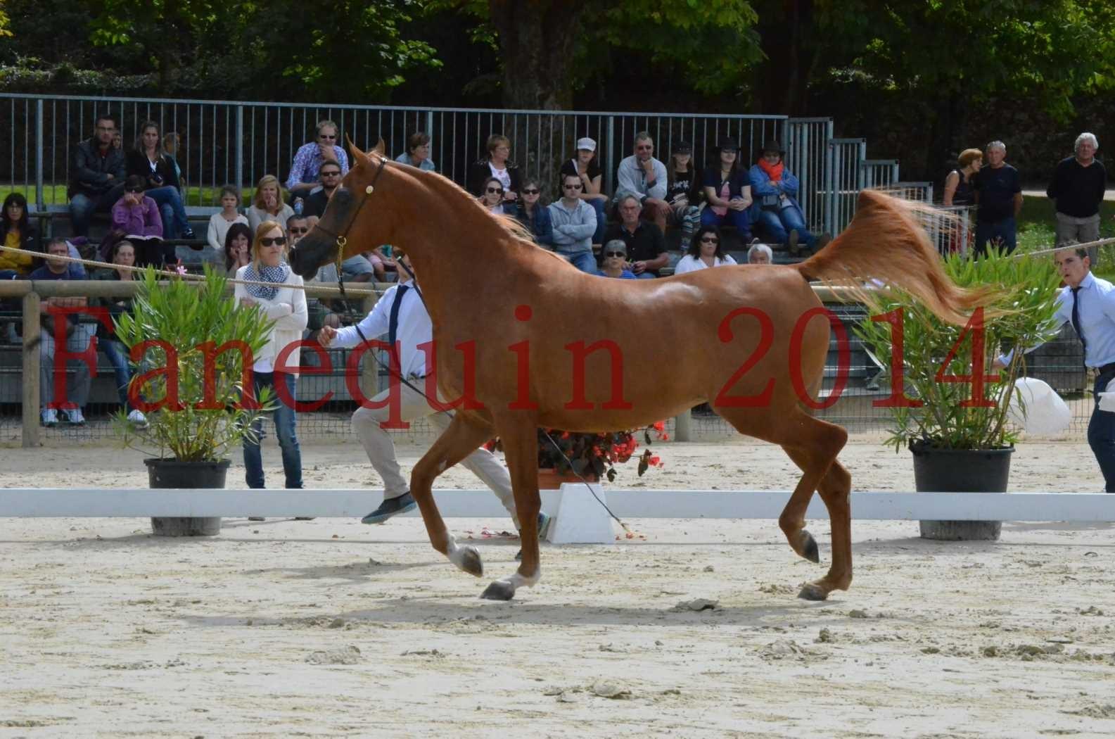 CHAMPIONNAT DE FRANCE 2014 A POMPADOUR - Championnat - LUTFINAH JA - 04