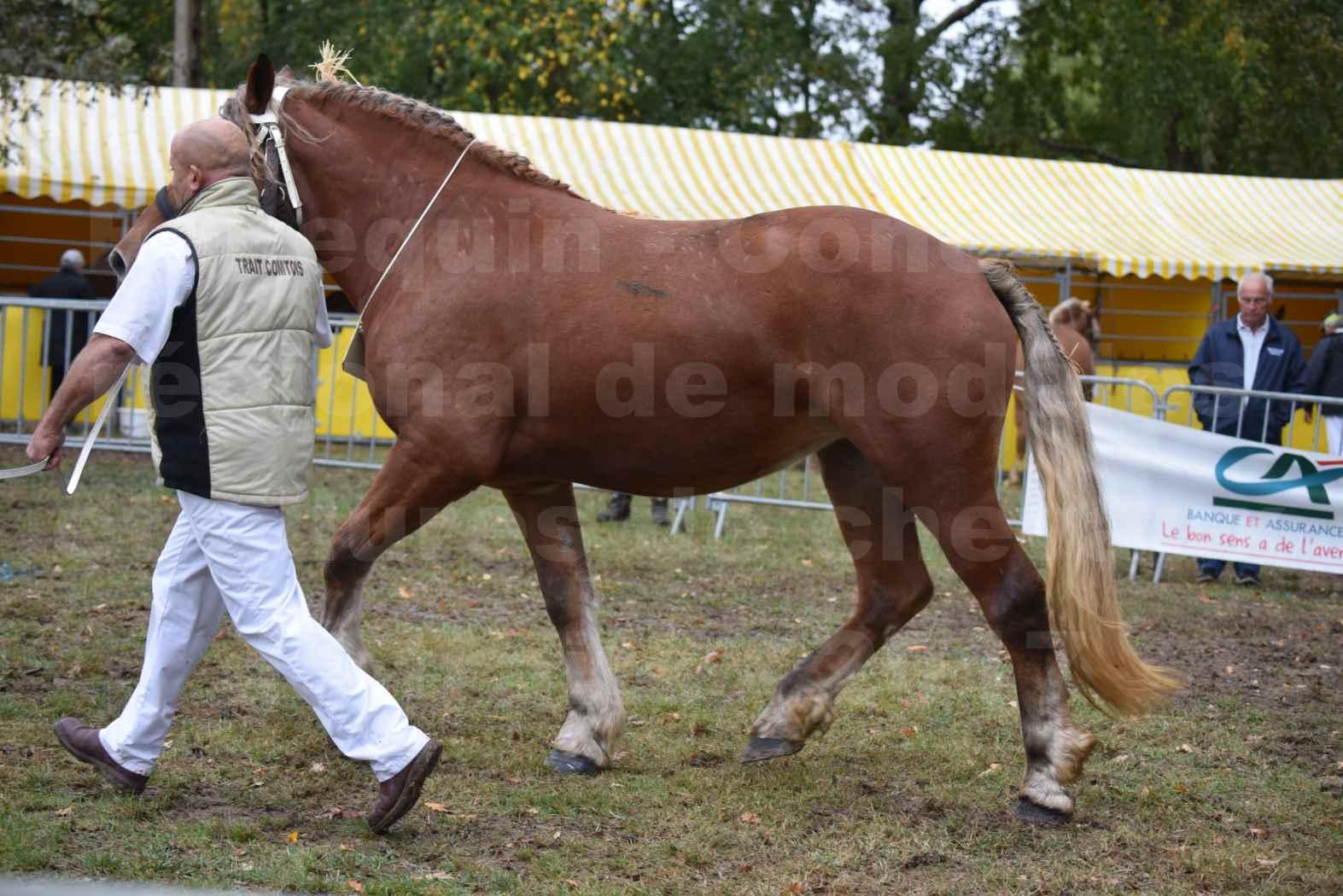 Concours Régional de chevaux de traits en 2017 - Trait COMTOIS - ERANIE DES RAYNAUDS - 14