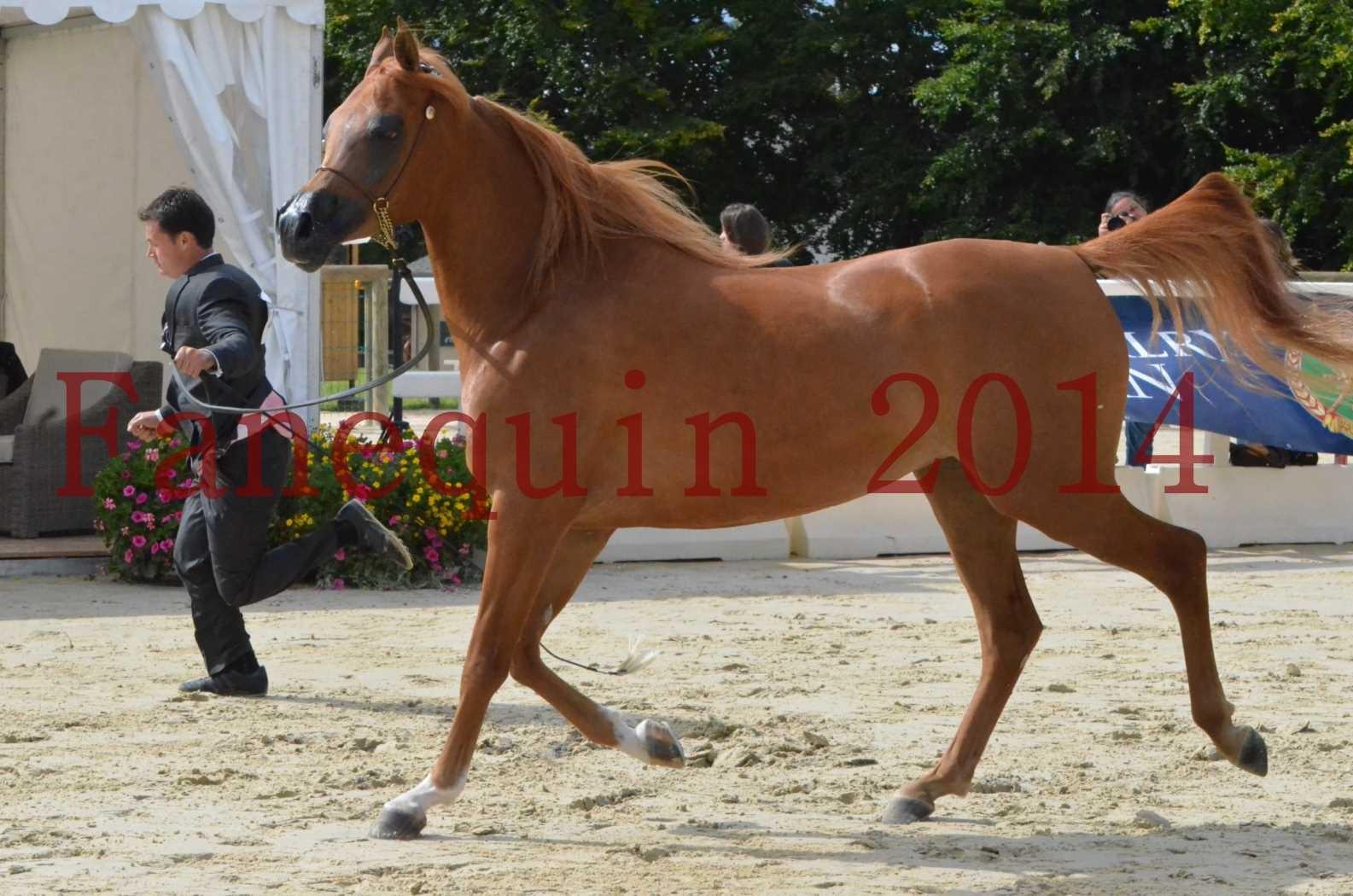 CHAMPIONNAT DE FRANCE 2014 A POMPADOUR - Sélection - LUTFINAH JA - 29