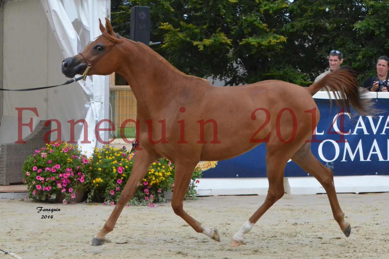 CHAMPIONNAT DE FRANCE 2014 A POMPADOUR - Notre Sélection - SHAH NAFISSA - 06