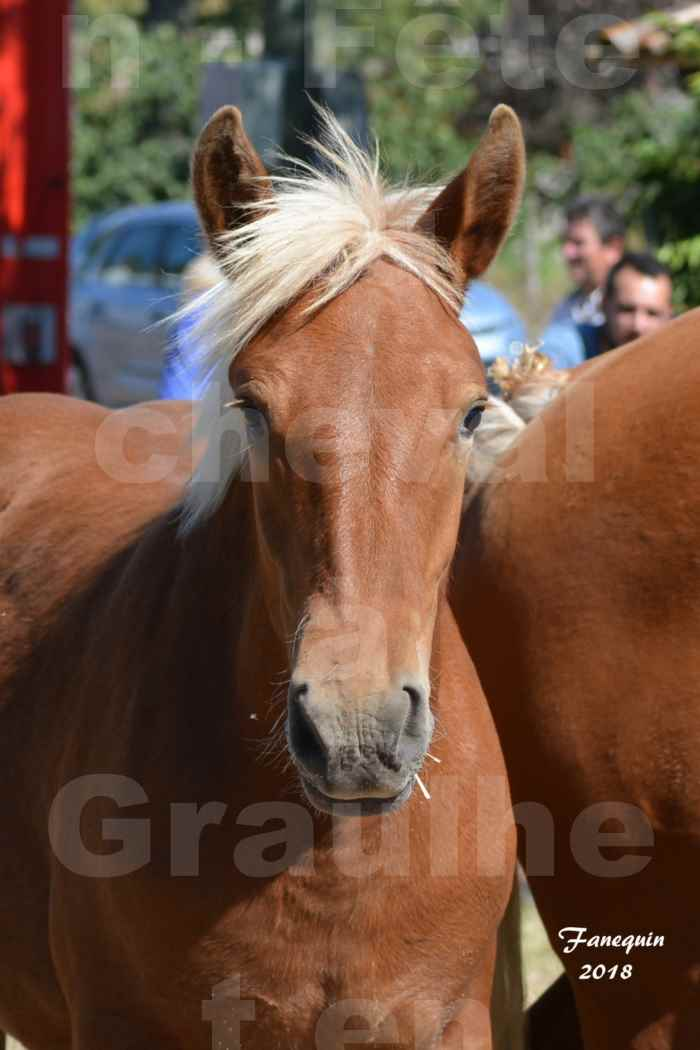Fête du cheval à GRAULHET le 16 septembre 2018 - Concours Départemental de chevaux de traits - Portraits - 5