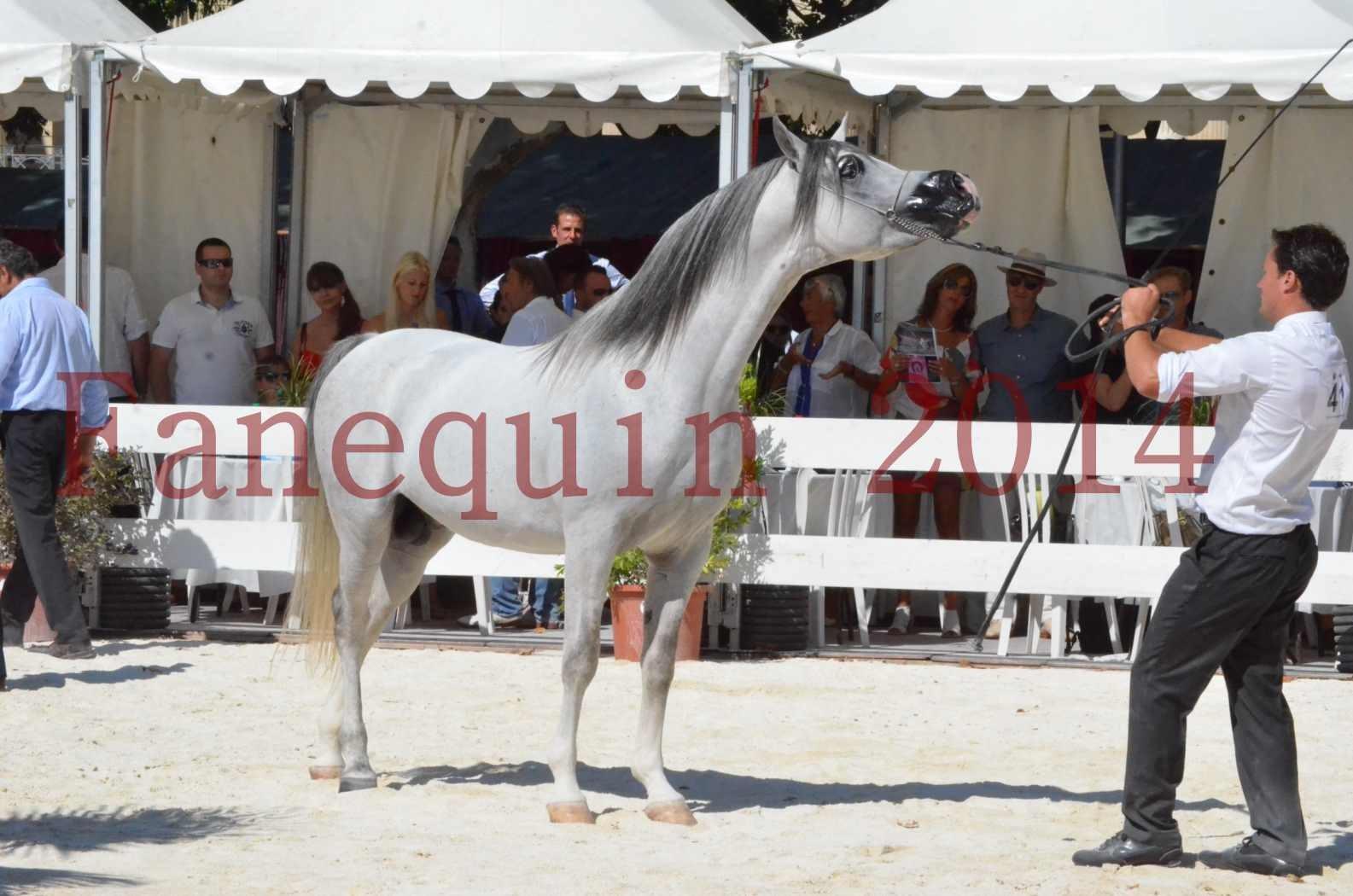 Concours National de Nîmes de chevaux ARABES 2014 - Sélection - SHAOLIN DE NEDJAIA - 80