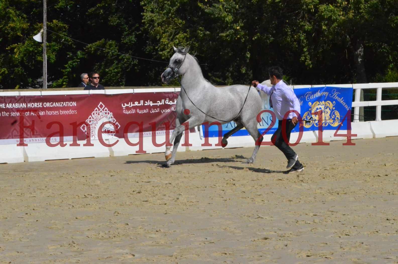 CHAMPIONNAT DE FRANCE  2014 A POMPADOUR - Sélection - SHEYK DE GARGASSAN - 13