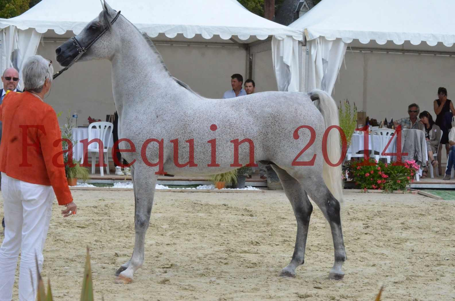 CHAMPIONNAT DE FRANCE  2014 A POMPADOUR - Championnat - SHEYK DE GARGASSAN - 17
