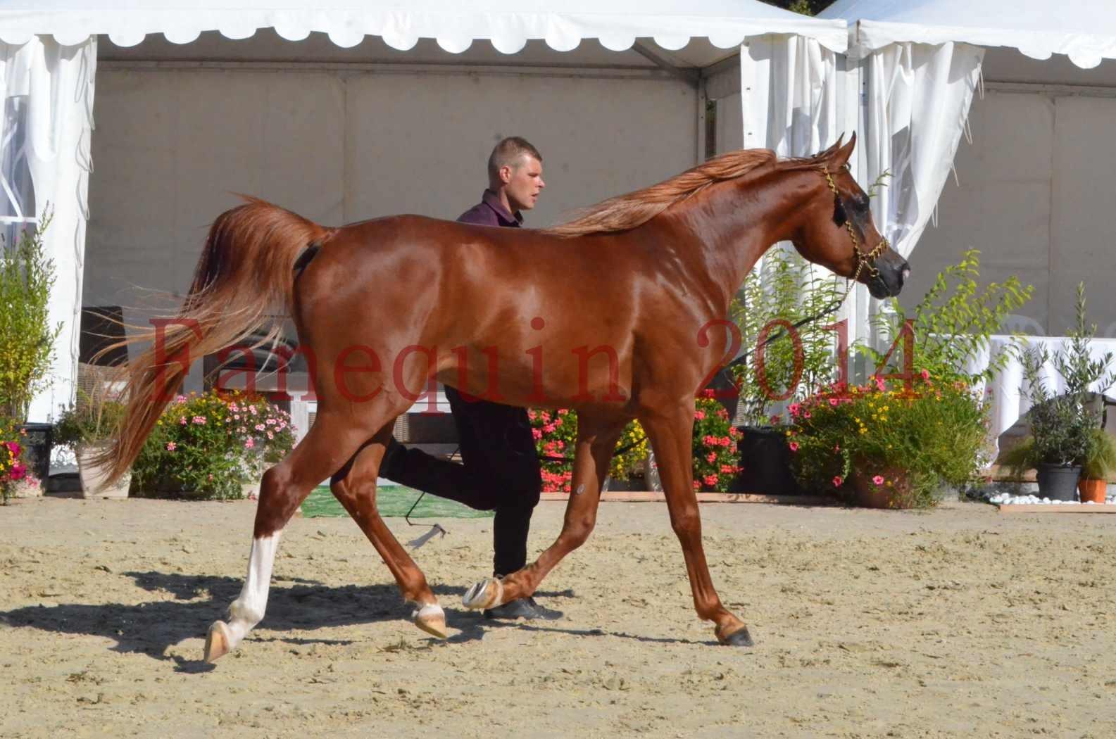 Championnat de FRANCE 2014 - Amateurs - SELECTO IBN SAMAWI - 046