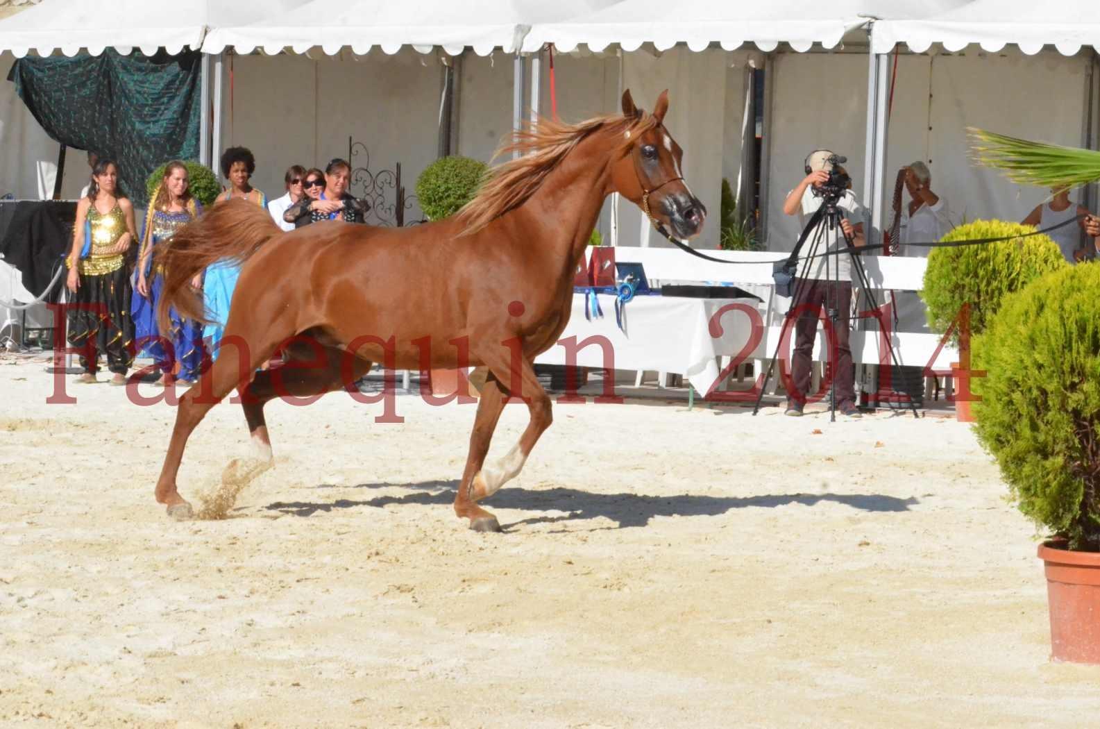 Concours National de Nîmes de chevaux ARABES 2014 - Championnat - MASSAI DE BARREL - 78