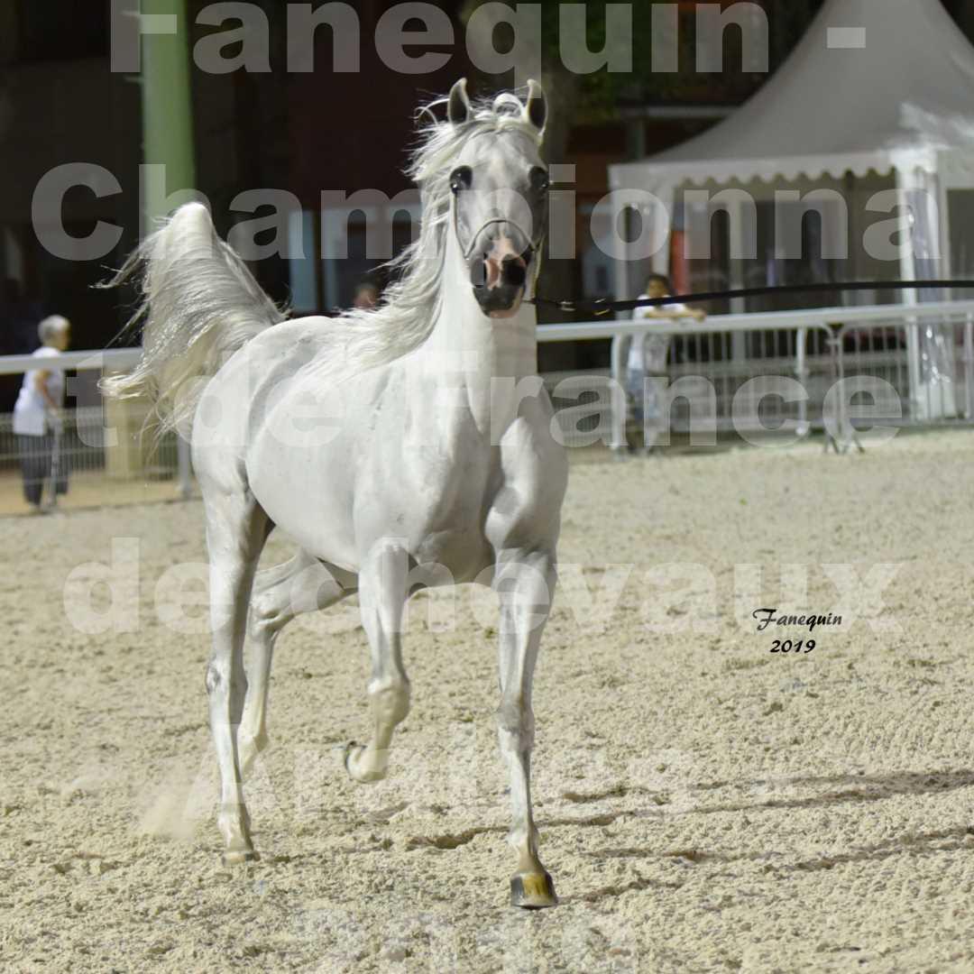 Championnat de France des chevaux Arabes en 2019 à VICHY - SHAMS EL ASHIRAF - 1