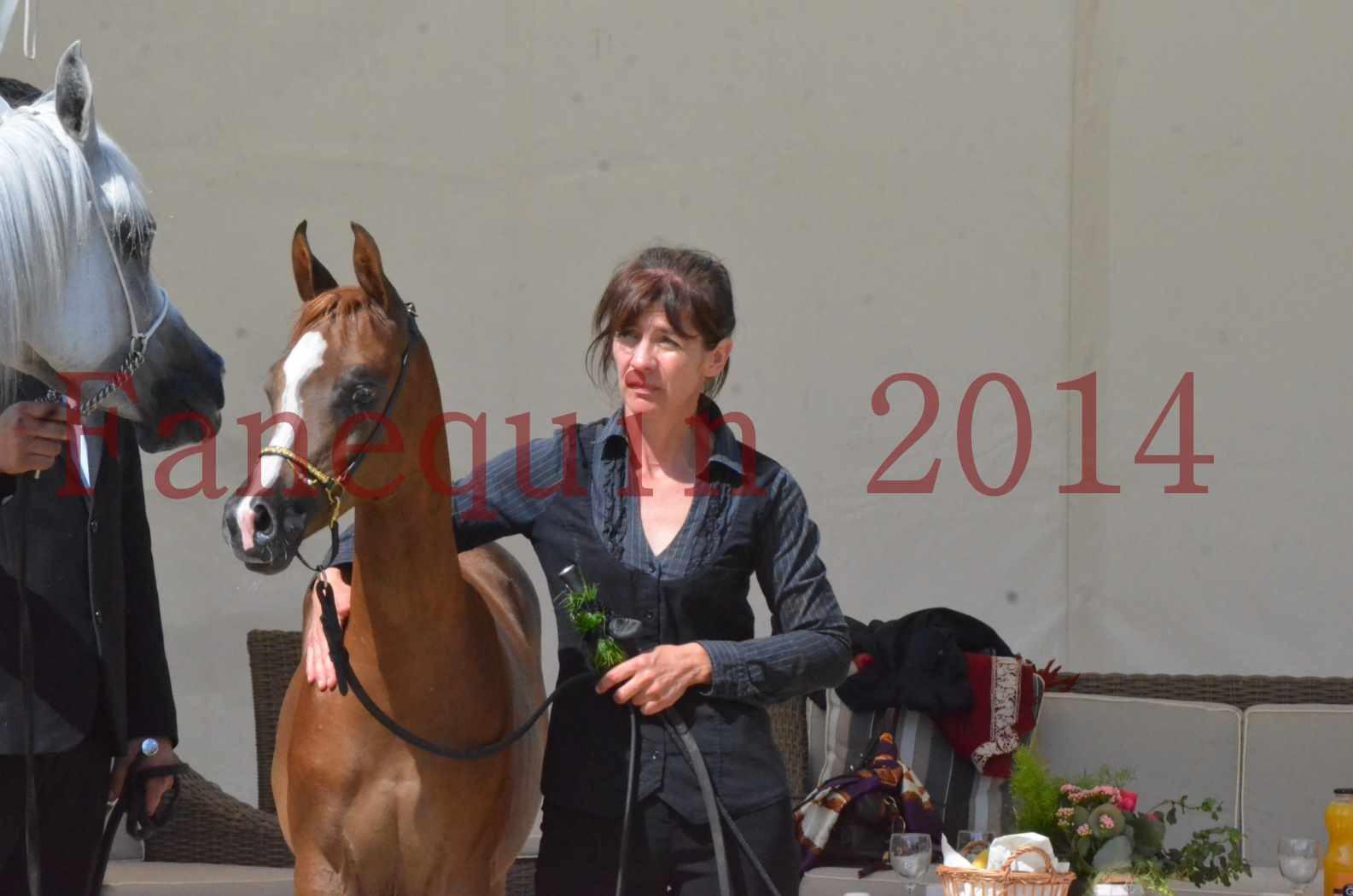 CHAMPIONNAT DE FRANCE 2014 A POMPADOUR - Championnat - TSAR KENZA - 79
