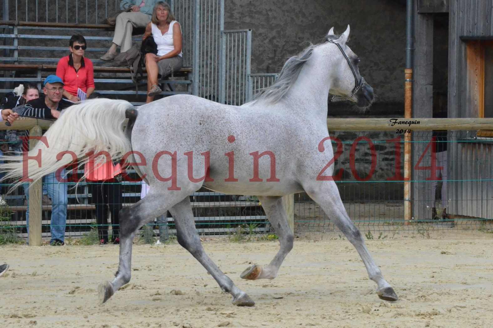 CHAMPIONNAT DE FRANCE  2014 A POMPADOUR - Notre Sélection - SHEYK DE GARGASSAN - 09