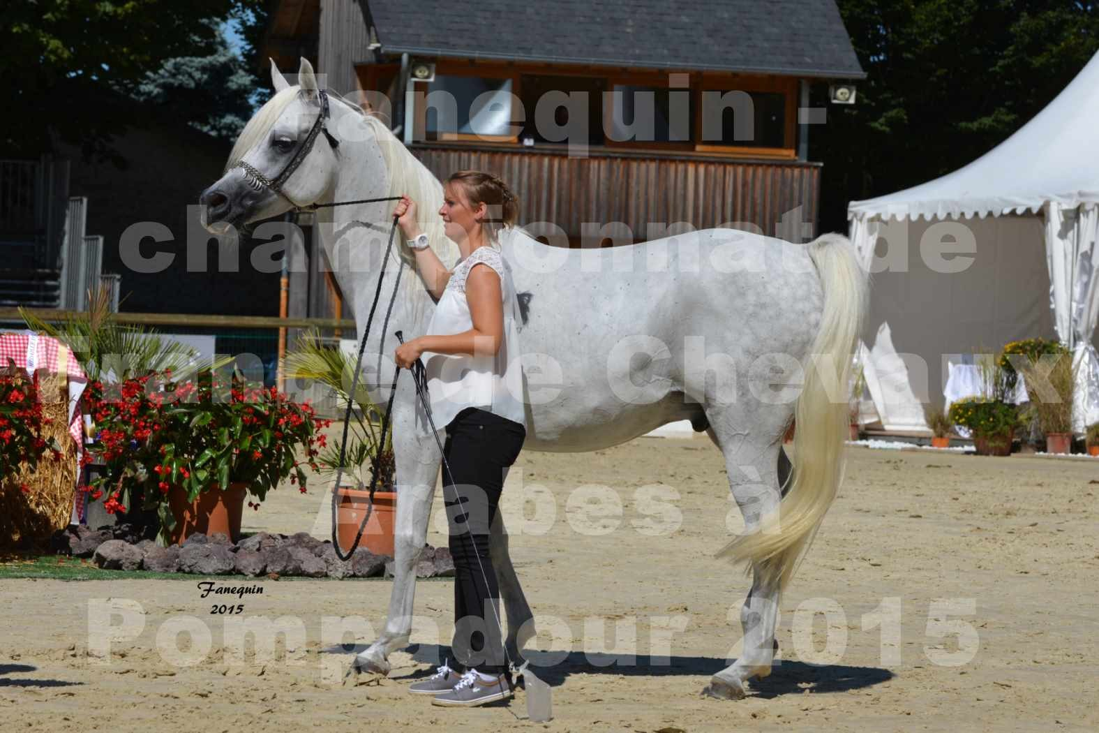 Championnat de FRANCE du cheval ARABE à POMPADOUR 2015 - Classes PROFESSIONNELS - HAADJA - 5