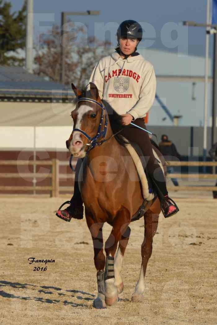 Cheval Passion 2016 - Présentation extérieure de chevaux Arabes montés - 06