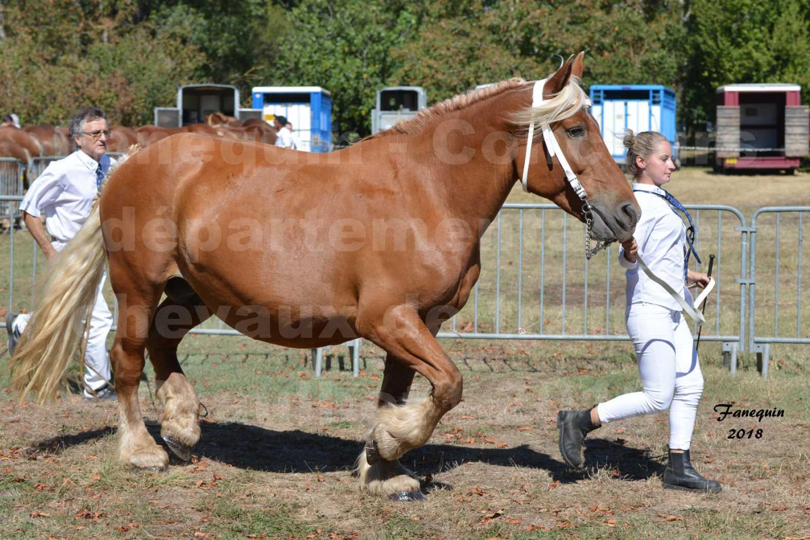 Concours départemental de chevaux de traits à GRAULHET en 2018 - Elevage POUJADE - Notre Sélection - 15