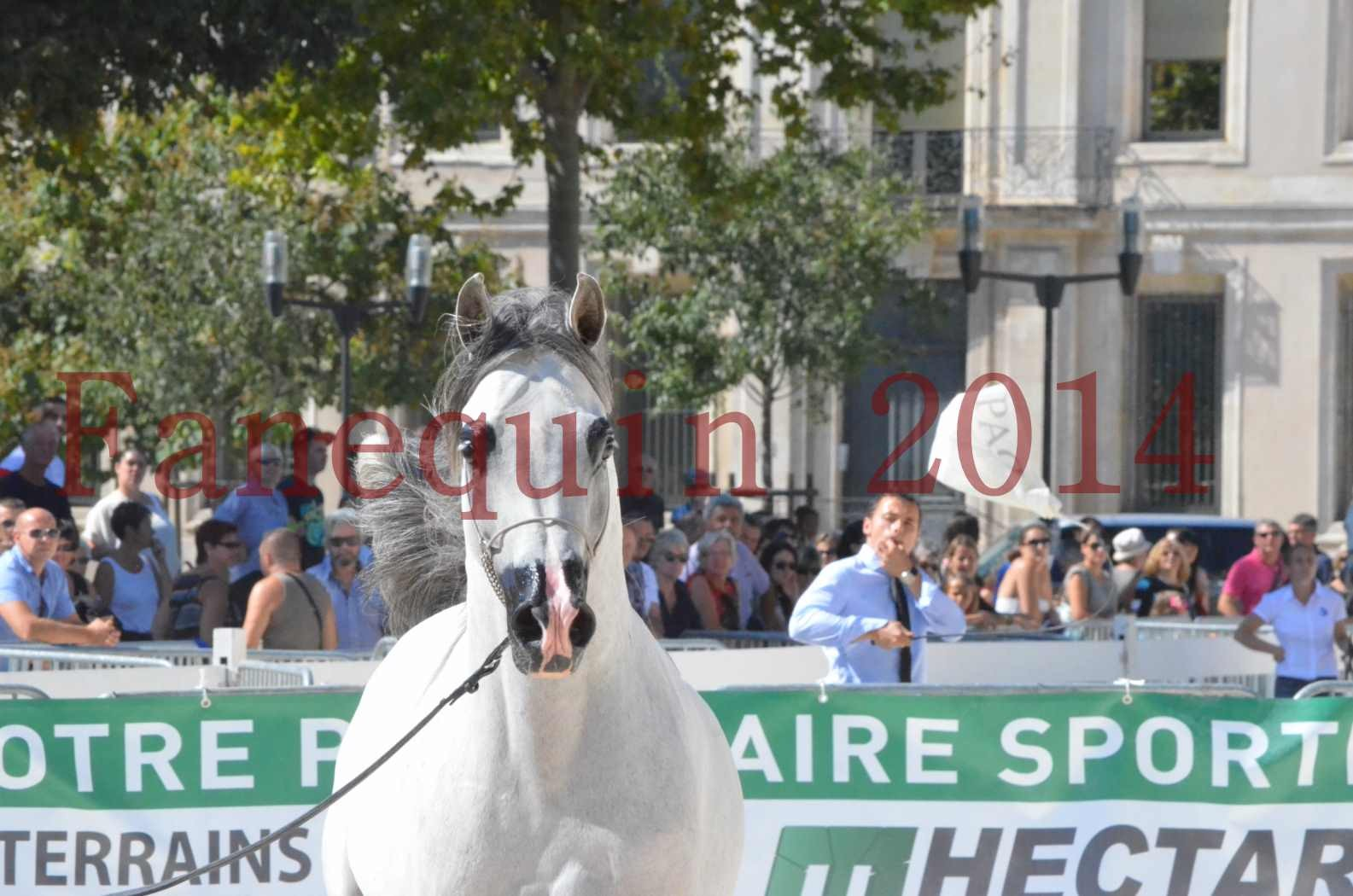 Concours National de Nîmes de chevaux ARABES 2014 - Sélection - SHAOLIN DE NEDJAIA - 54