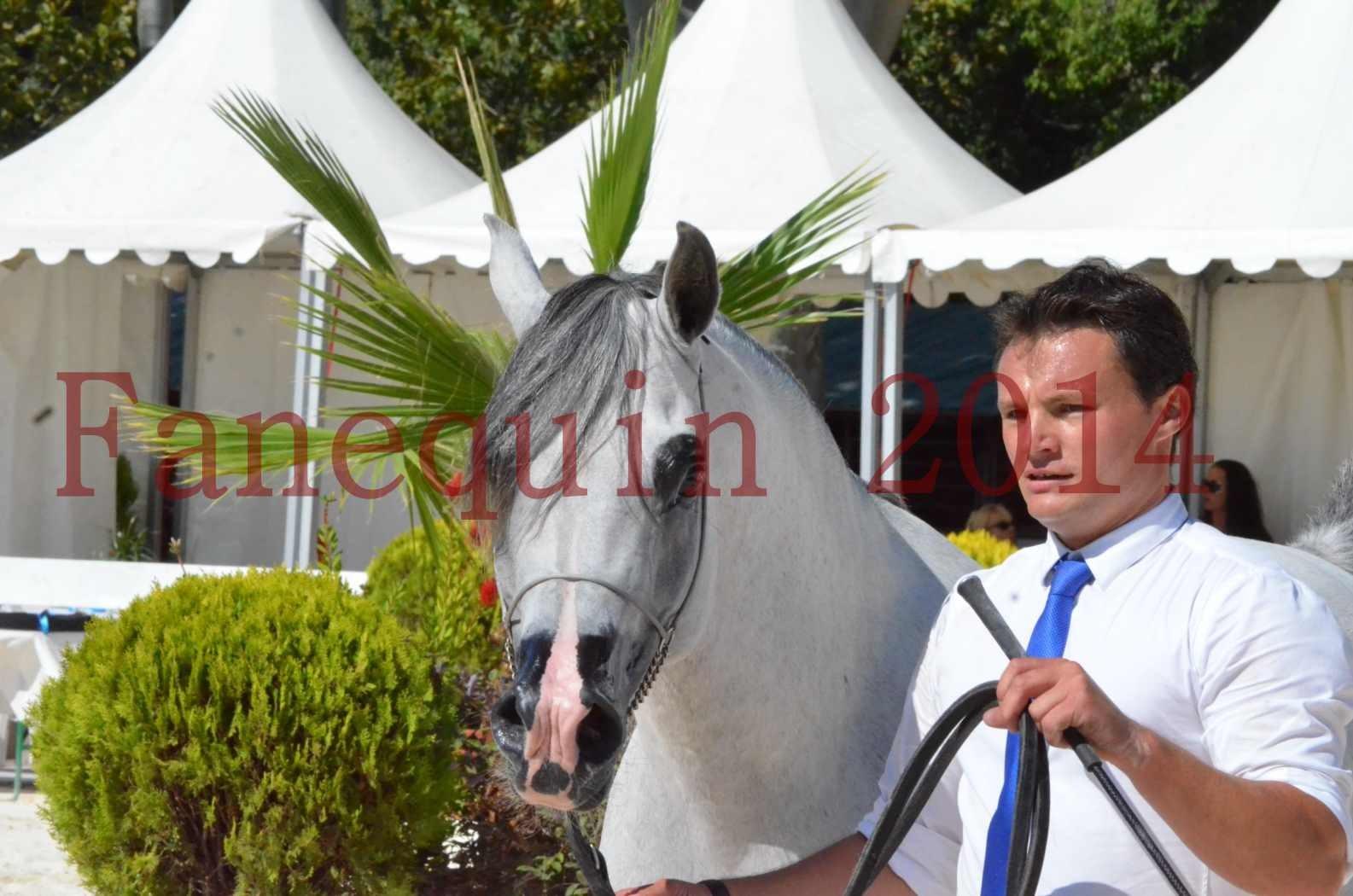 Concours National de Nîmes de chevaux ARABES 2014 - Sélection - SHAOLIN DE NEDJAIA - 76