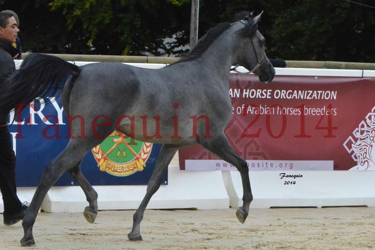 CHAMPIONNAT DE FRANCE 2014 A POMPADOUR - Notre Sélection - AL MINYA - 3
