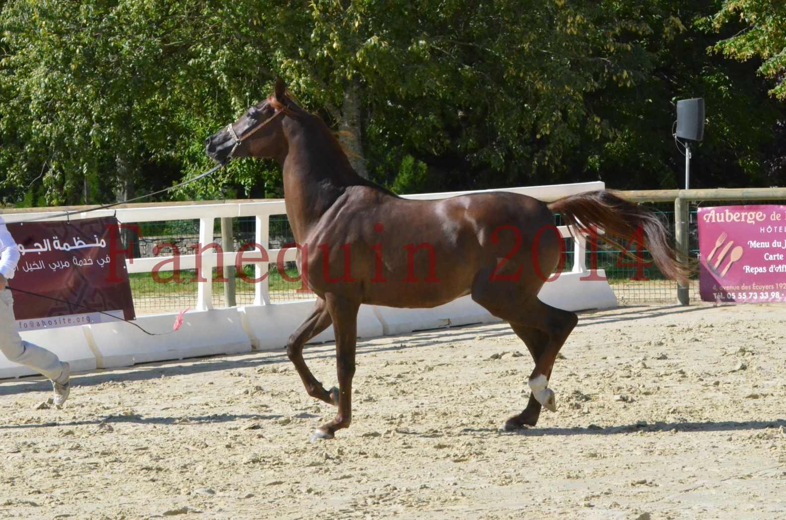 Championnat de FRANCE 2014 - Amateurs - LAMAL - 45