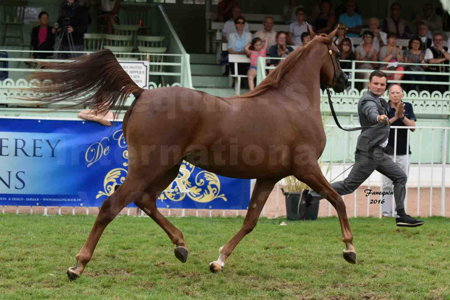 International Arabian Horse Show B de VICHY 2016 - PEARL DE DJOON - Notre Sélection - 10