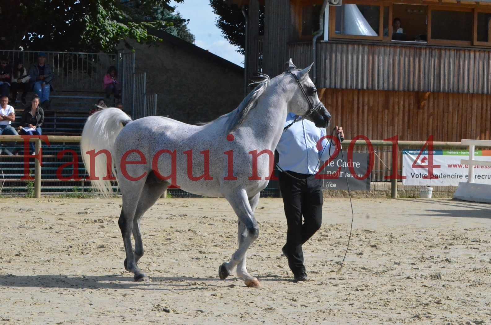 CHAMPIONNAT DE FRANCE  2014 A POMPADOUR - Sélection - SHEYK DE GARGASSAN - 09
