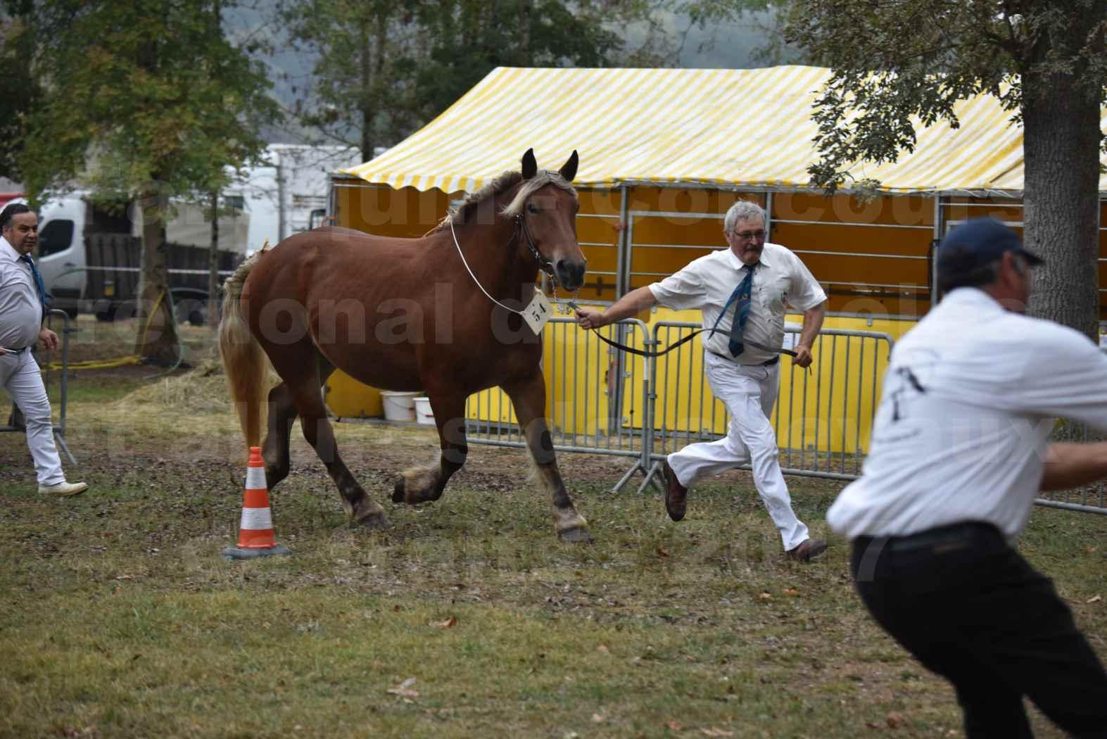 Concours Régional de chevaux de traits en 2017 - Pouliche Trait COMTOIS - DUCHESSE DE BENS - 14