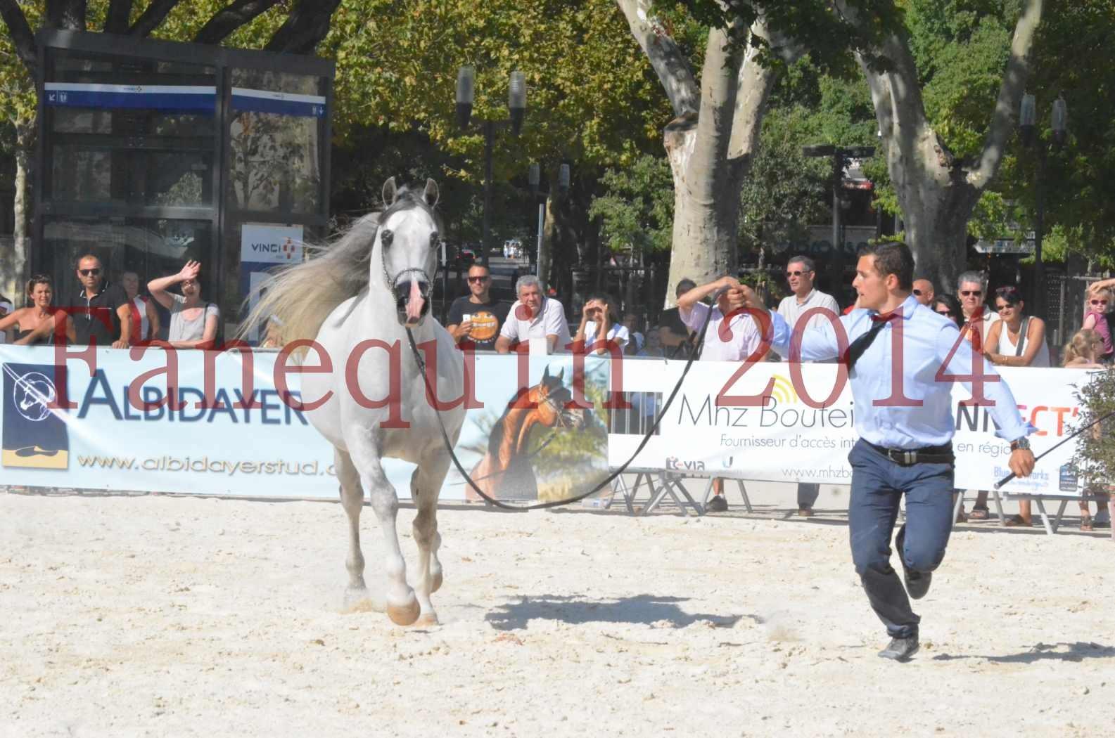 Concours National de Nîmes de chevaux ARABES 2014 - Championnat - SHAOLIN DE NEDJAIA - 18