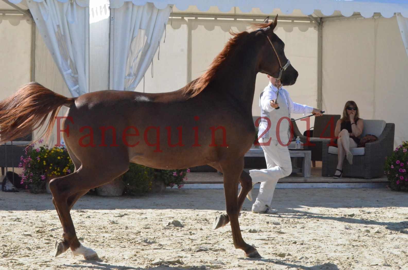 Championnat de FRANCE 2014 - Amateurs - LAMAL - 39