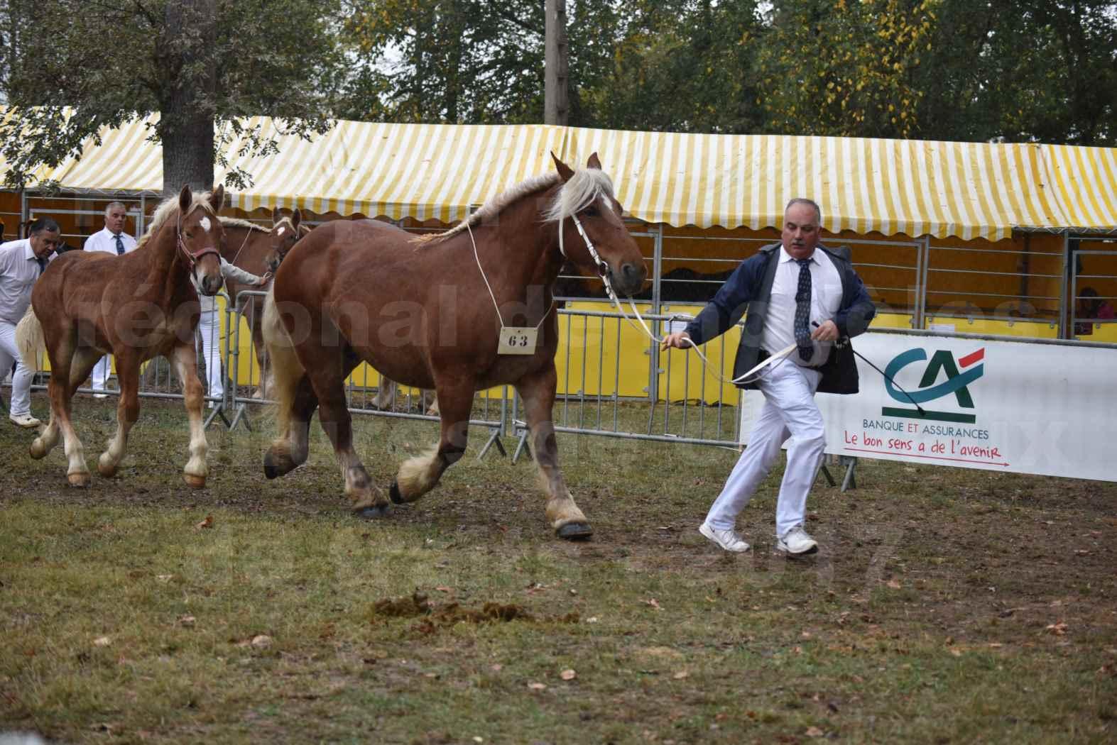 Concours Régional de chevaux de traits en 2017 - Jument Suitée - Trait COMTOIS - TOSCANE DE GIOUX - 10