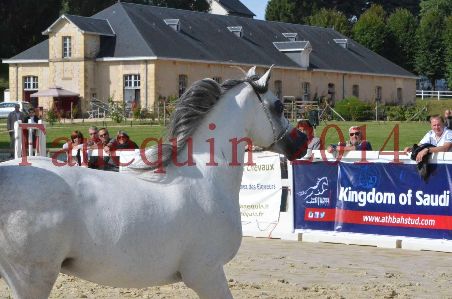 CHAMPIONNAT DE FRANCE  2014 A POMPADOUR - Sélection - SHAOLIN DE NEDJAIA - 48