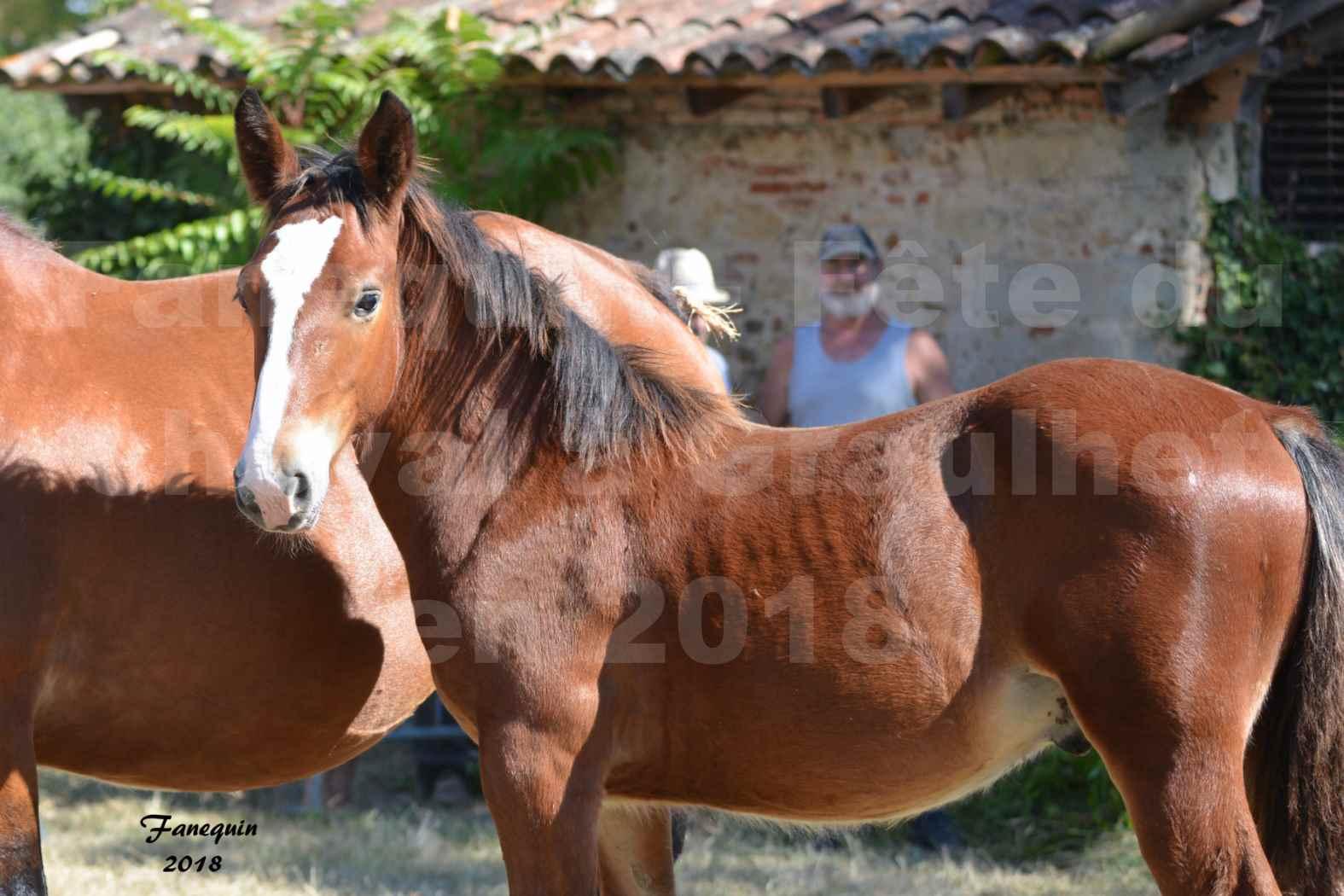 Fête du cheval à GRAULHET le 16 septembre 2018 - Concours Départemental de chevaux de traits - Portraits - 4