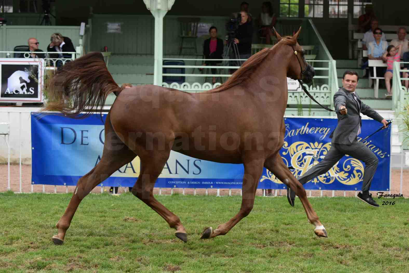 International Arabian Horse Show B de VICHY 2016 - PEARL DE DJOON - Notre Sélection - 09