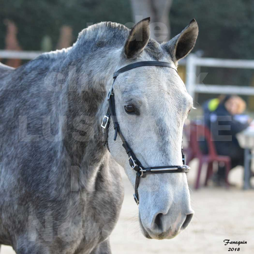 Confirmation de chevaux LUSITANIENS aux Haras d'UZES Novembre 2018 - DALIA DU CLOS - Portraits - 3
