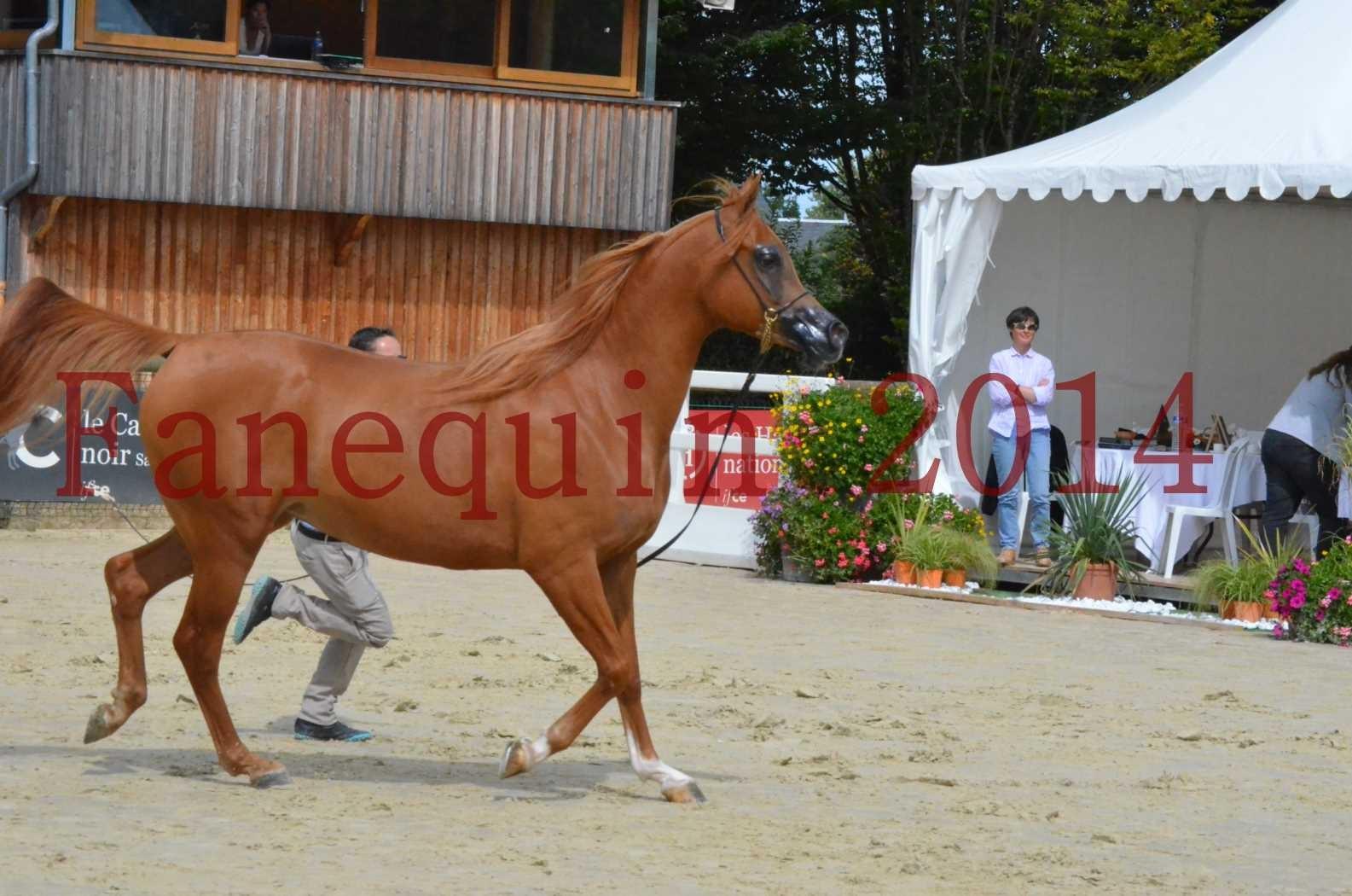 CHAMPIONNAT DE FRANCE 2014 A POMPADOUR - Championnat - LUTFINAH JA - 28