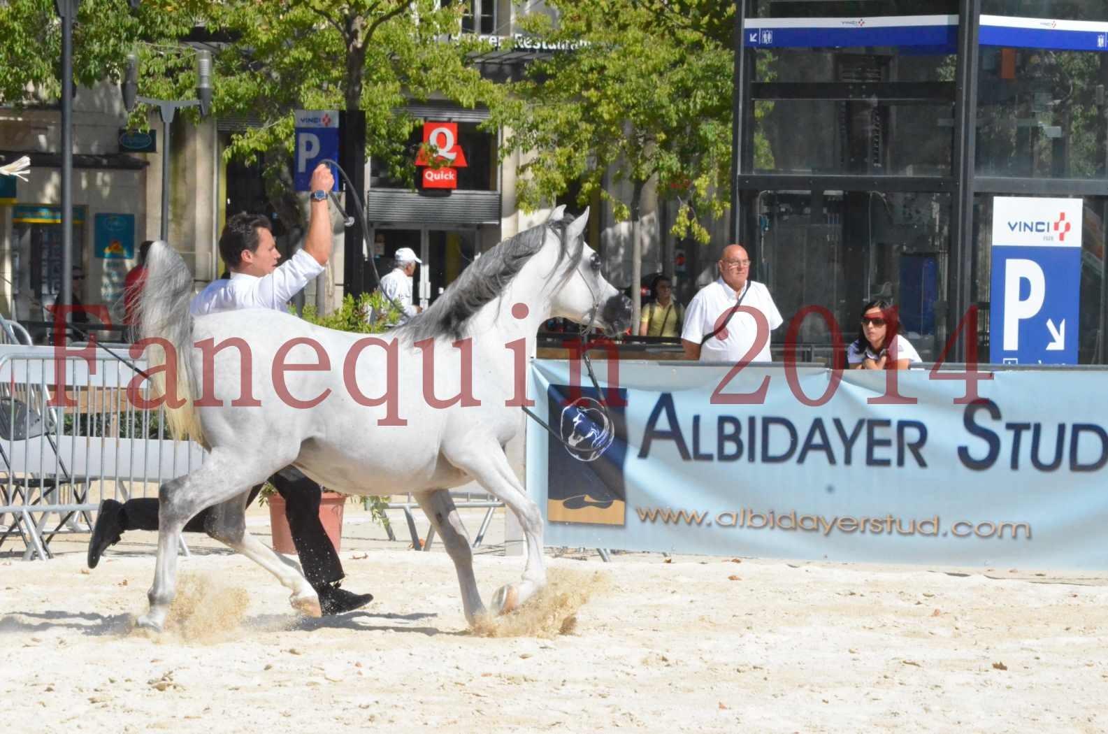 Concours National de Nîmes de chevaux ARABES 2014 - Sélection - SHAOLIN DE NEDJAIA - 42