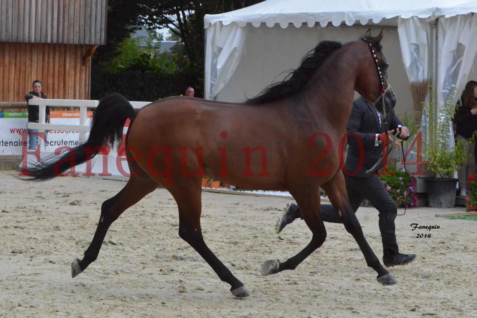 CHAMPIONNAT DE FRANCE 2014 A POMPADOUR - Notre Sélection - ABSOLUT DE DJOON - 03