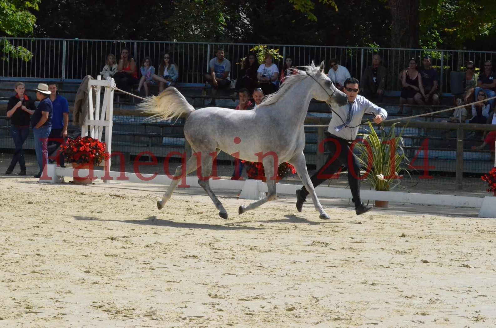 Championnat de FRANCE 2014 - Amateurs - VOLODIA DE LAFON - 020