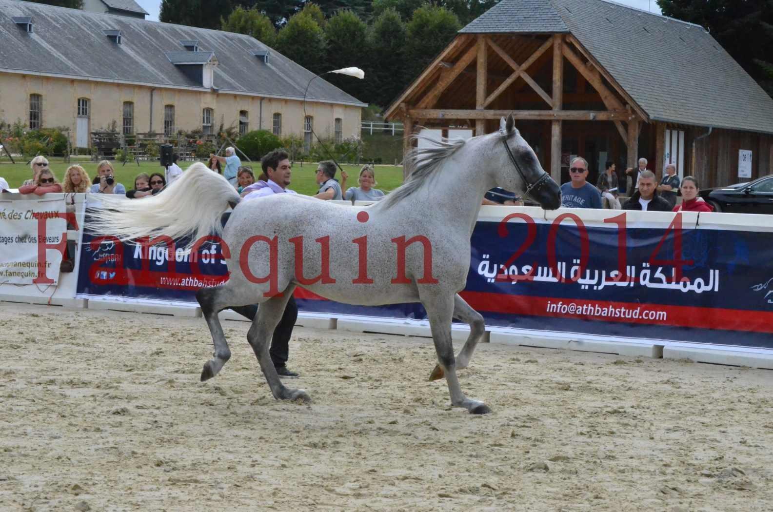 CHAMPIONNAT DE FRANCE  2014 A POMPADOUR - Championnat - SHEYK DE GARGASSAN - 01