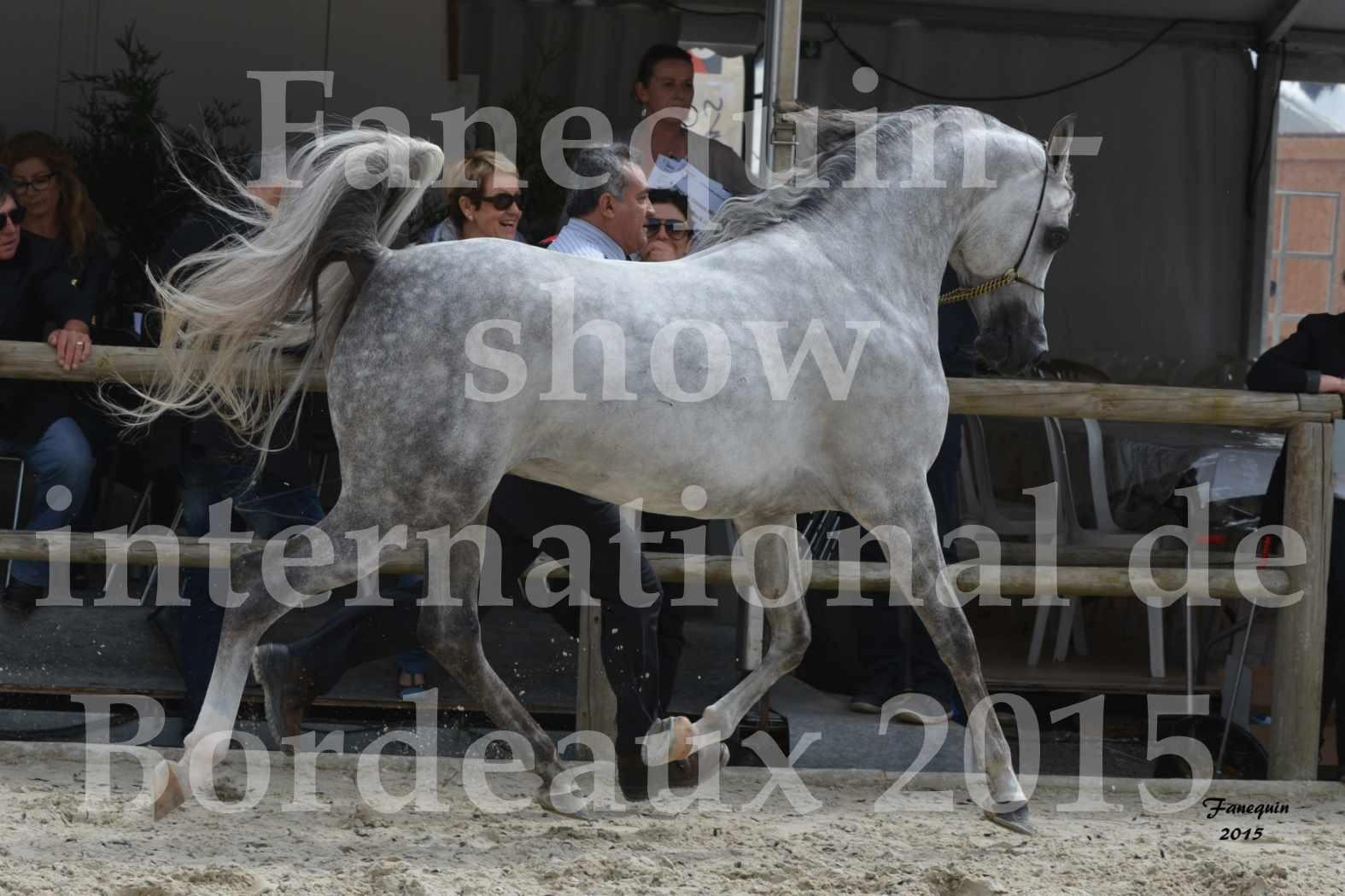 Salon Equitaine de Bordeaux 2015 - Show International de chevaux ARABES - 4