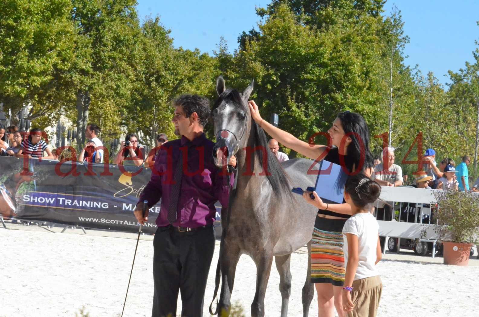Concours National de Nîmes de chevaux ARABES 2014 - Championnat - JOSEPH'S BOUZIOLS - S 21