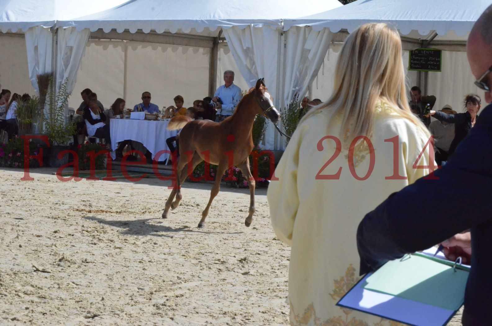 CHAMPIONNAT DE FRANCE 2014 A POMPADOUR - Championnat - TSAR KENZA - 61