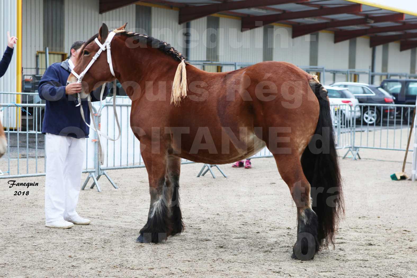 Concours Régional OCCITANIE de chevaux de traits à REQUISTA - COMETE DE GRILLOLES - 5